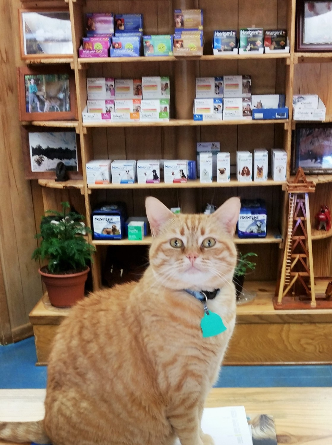 University Animal Clinic - Tyler TX - Our Furry Receptionist